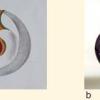 a) Progetto di: Marchini Marta;b) Realizzato da: Andrea Ziglio e Giacomo Barbini